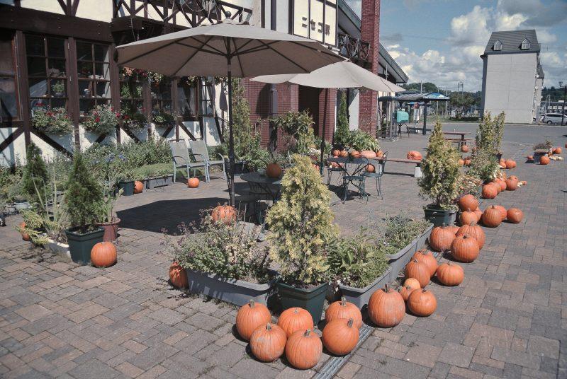 Growth and Storage of Hokkaido Pumpkin