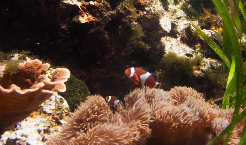 coral sea tank