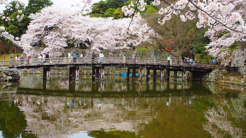 hikone garden