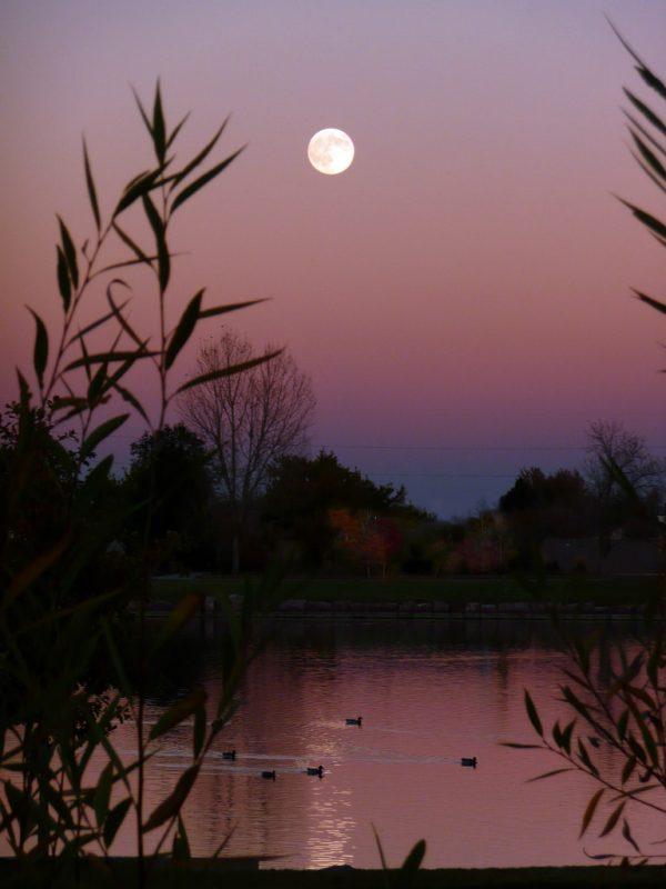 harvest moon at night