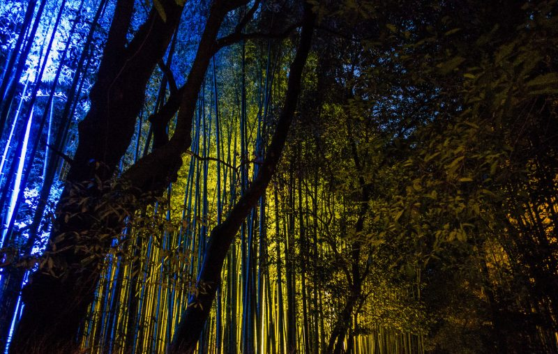 bamboo forest night