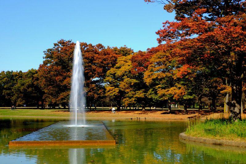 yoygi park, tokyo