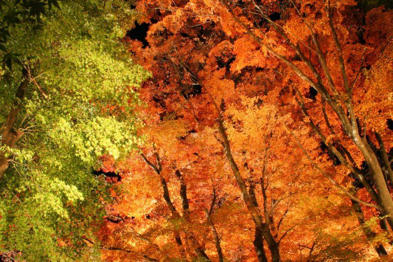 Kawaguchiko Autumn Leaves Festival
