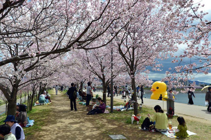 Osaka Spring Duck