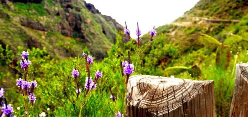 Blumen und Wegbegrenzung im Barranco del Inferno