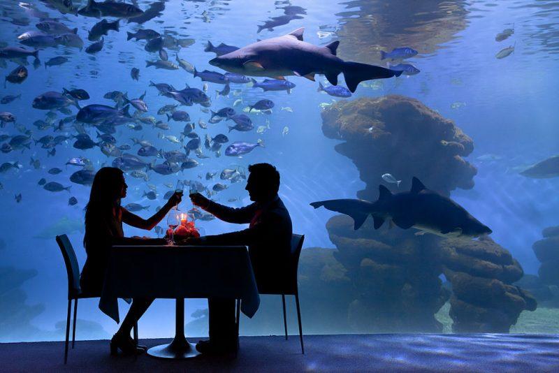 1024px-Palma_Aquarium_-_Cena_con_tiburones