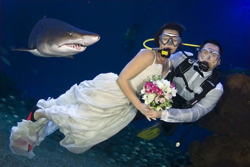 800px-Palma_Aquarium-bodabajoelagua