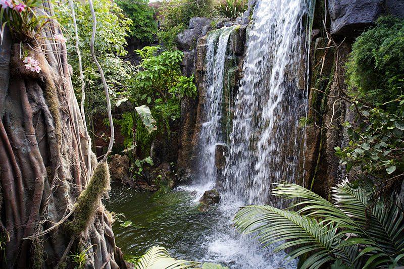 800px-Palma_Aquarium-La_jungla
