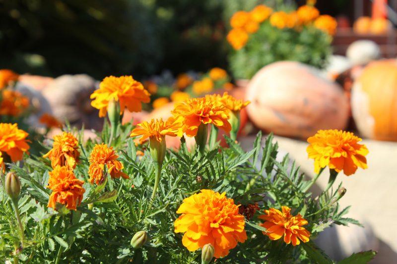 Salou Florists