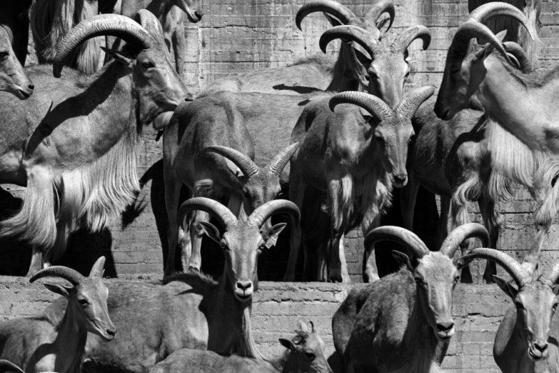 madrid zoo 3