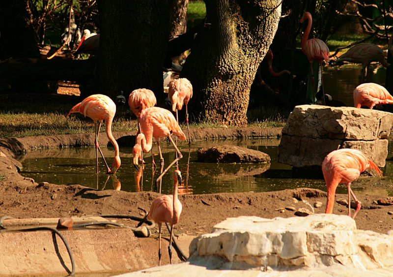 madrid zoo 4
