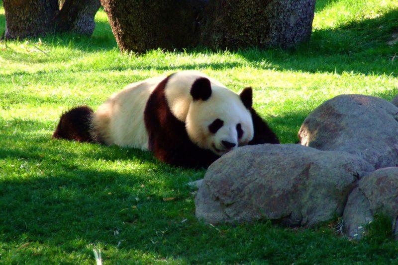 madrid zoo 6