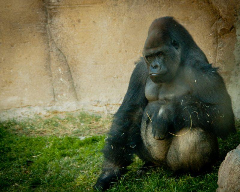 madrid zoo 9