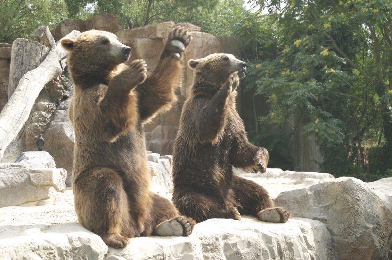 madrid zoo 13