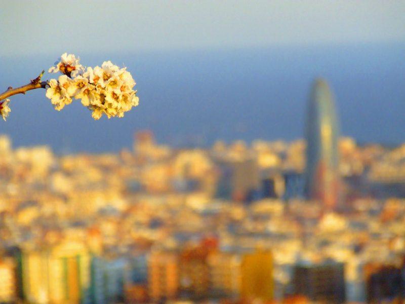 Barca Spring