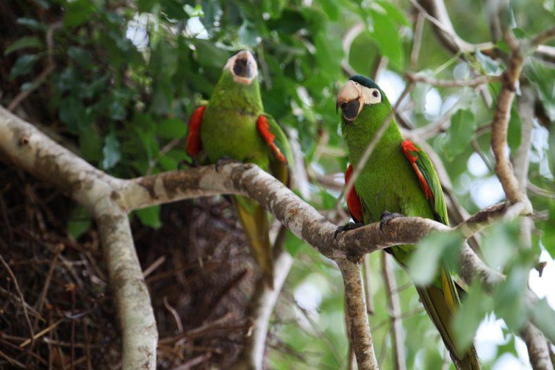 Pantanal 2009