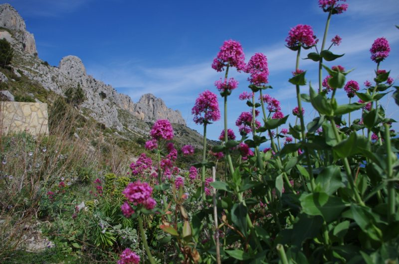 Spain Flowers