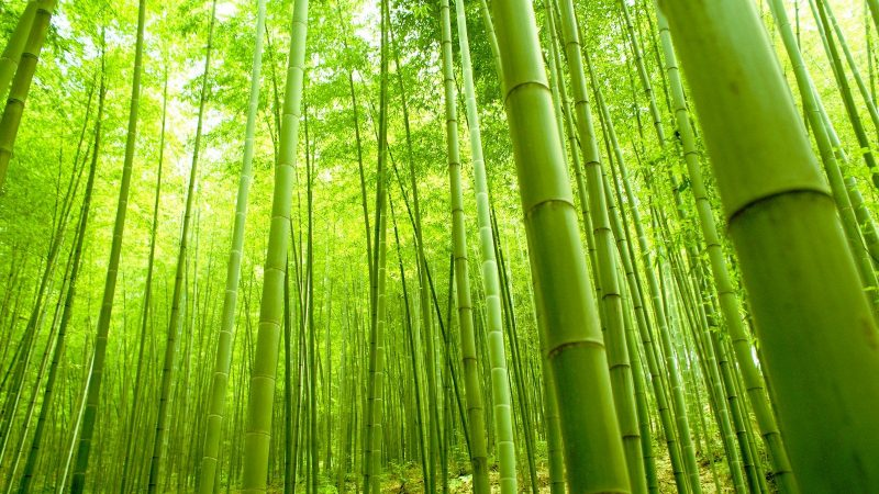7 Things About Bamboo Forest And Arashiyama In Kyoto